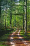 Path in forest at springtime. Path in forest at the springtime royalty free stock photos