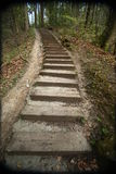 Path in forest with steps Stock Images