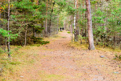 Path in forest Stock Image
