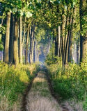 Path through forest. Royalty Free Stock Photos