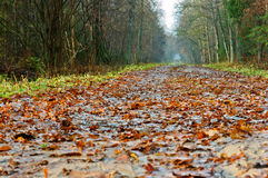Path in the forest. Strewn with autumn yellow leaves after the rain puddles Stock Photography
