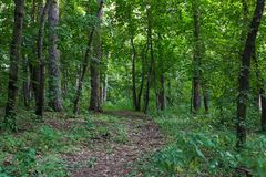 A path in forest stock photos