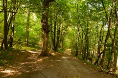 Path in the forest in summer. Magic forest and nature colors. royalty free stock photography