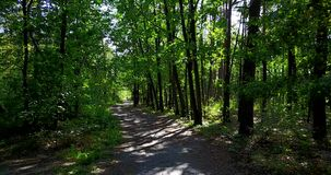 Path in the forest, summertime stock footage