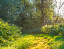Path through a forest in sunlight Royalty Free Stock Photos