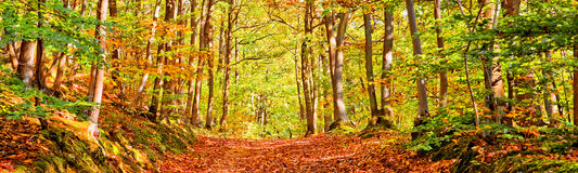 Path in a forest on a sunny autumn day Stock Images