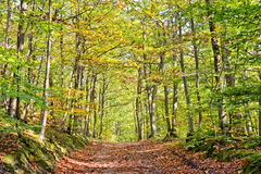 Path in a forest on a sunny day Royalty Free Stock Image