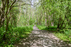 Path through a forest Royalty Free Stock Photo