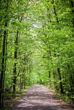 Path in forest Royalty Free Stock Images