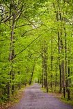 Path in forest Royalty Free Stock Photography