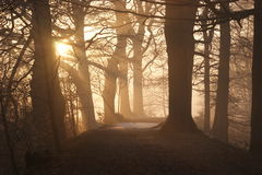 Path through forest at sunset Royalty Free Stock Photo