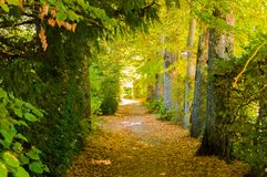 Path through the forest surrounded by trees forming a tunnel. Beautiful path through the forest surrounded by trees forming a tunnel inside the farm of San stock image