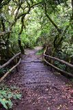 Path in the forest thicket Royalty Free Stock Images