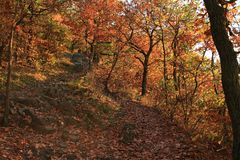 Path in forest to Celtic opium in Prague. Path in colorful autumn forest to hill with Celtic opium in Zbraslav, Prague, Czech Republic Royalty Free Stock Image
