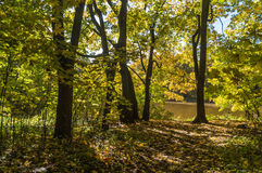 A path through the forest to the pond. Golden autumn, one sunny day, path through the forest to the pond Stock Photo