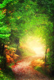 Path in the forest towards the light Royalty Free Stock Images