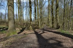 Path forest trail wood tree landscape. Outdoor Stock Photography