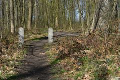 Path forest trail wood tree landscape. Outdorr Royalty Free Stock Images