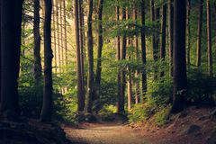 Path Through Forest Trees Stock Photography