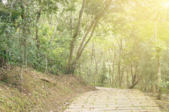 Path in forest under sunlight Royalty Free Stock Photo
