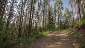 Path in the forest, video with sound stock footage