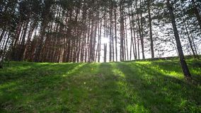 Path in the forest, video with sound stock video footage