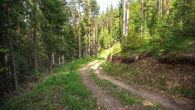 Path in the forest, video stock video