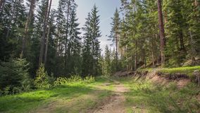 Path in the forest, video stock footage