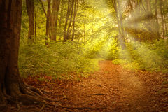 Path in forest. View on a path in forest at summer Royalty Free Stock Image