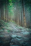 Path in the forest. vintage style.  Stock Images