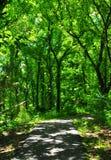 Path through Forest Walk at Horton Slough. River walk at Horton Slough on forest path Royalty Free Stock Photos