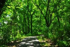 Path through Forest Walk at Horton Slough. River walk at Horton Slough on forest path Stock Photos