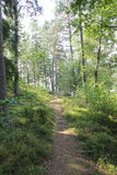 Path through the forest. Winding pathway through the woods Stock Photo