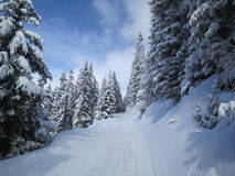 Path through the forest in winter. Path through a forest in winter, near Verbier, Switzerland Stock Images