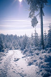 Path in the forest during winter Royalty Free Stock Image