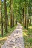 Path Through Forest Stock Photos