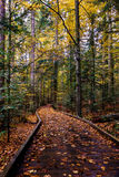 Path in the forest. Wooden path in forest in autumn with trees with many types of colors Stock Images