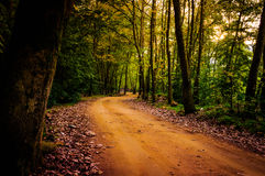 Path Through The Forest Stock Images
