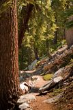Path in forest in Yosemite Stock Photo