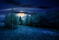 Path through forested grassy meadow at night. In full moon light. beautiful summer nature scenery Stock Photos