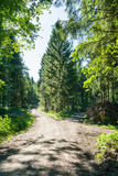 Path Fork Split in Dense Forest Trees Summer Foliage Dirt Footpa. Th Daytime Bright Sunny Decision royalty free stock images