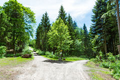 Path Fork Split in Dense Forest Trees Summer Foliage Dirt Footpath Daytime Bright Sunny Decision stock image