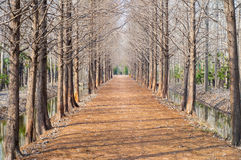 Path in the forrest. A path in the forrest in the winter royalty free stock photo