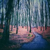 Path in the forrest. Long path in the forrest Royalty Free Stock Photo