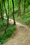 Path in a forset Stock Photos