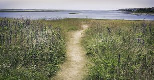 Path at the Fort Hill area in Eastham, MA Cape Cod. Path going through purple flowers to the water at the Fort Hill area in Eastham, MA Cape Cod Stock Photo