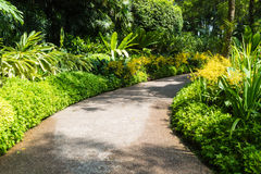 Path with a frame of yellow orchids Royalty Free Stock Photo