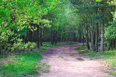 Path into fresh green Spring forest Stock Image