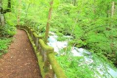 Path of fresh green trees Royalty Free Stock Photos