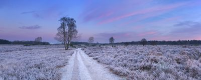 Path through frosted heather in winter in The Netherlands. Path through frosted heather in winter, photographed just before sunrise near Hilversum in The royalty free stock photos